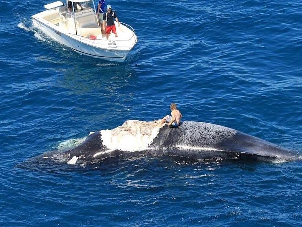 Man On Whale -TeCake