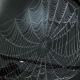 DARPA Memex to uncover hidden dark web secrets tecake