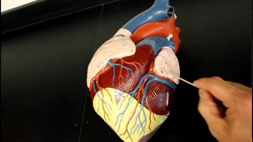 Heart treatement through nano drones tecake
