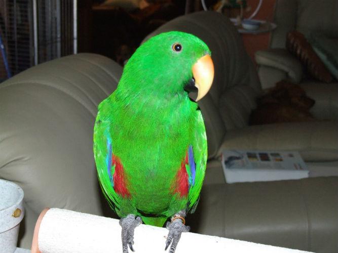 parrot tecake