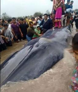 whale2 tecake