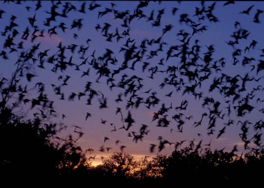 Deforestation in Western Ghats drifting Bat species towards extinction, study