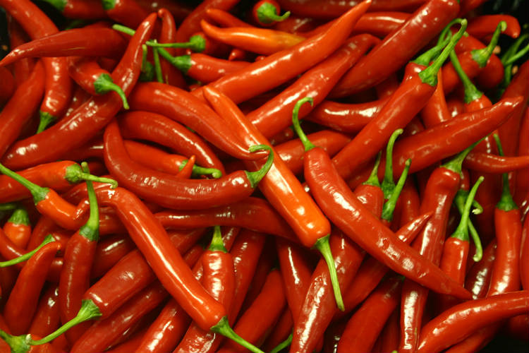 chillies can cure obesity
