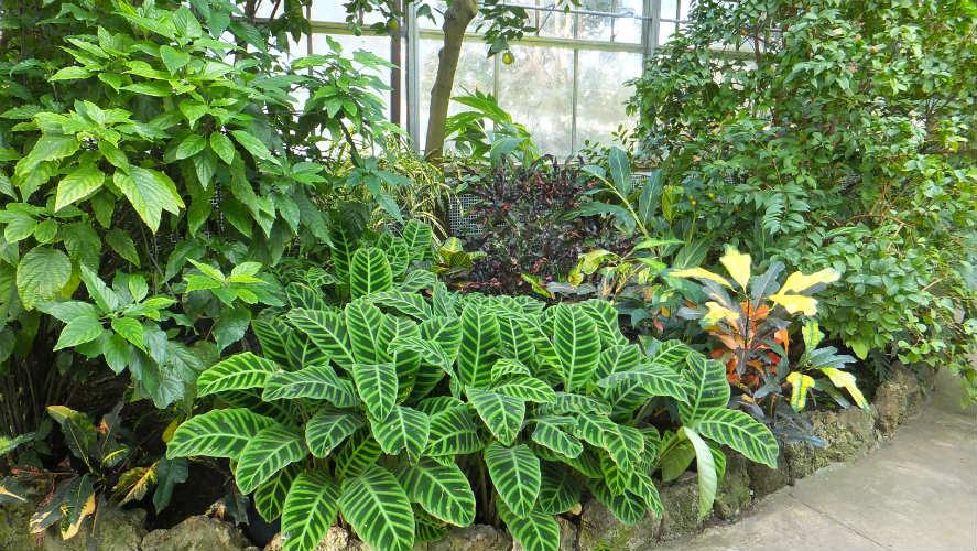 NASA: Plantation can help in reducing temperature in Urban areas