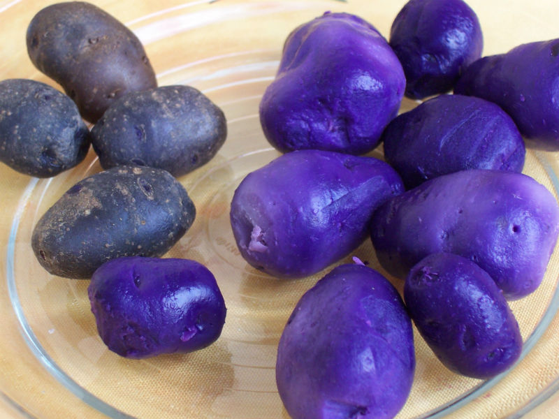 Consuming purple potato daily can prevent cancer, reveals Indian-origin researcher