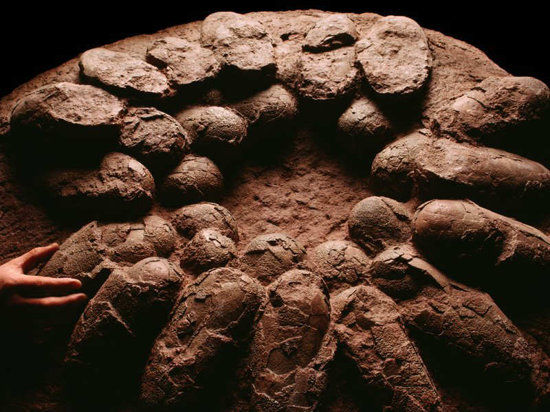 Madhya Pradesh: Two new dinosaur nesting sites discovered in Dhar district