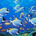Fish are the best athletes on Earth, reveals study