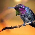 Bird - The TeCake