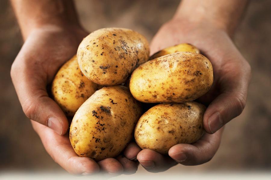 High potato intake ups the risk of Hypertension, study
