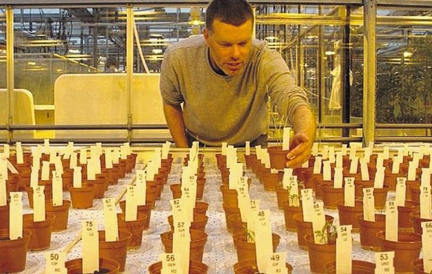Researcher grow crops in simulated Mars environment; All you need to know