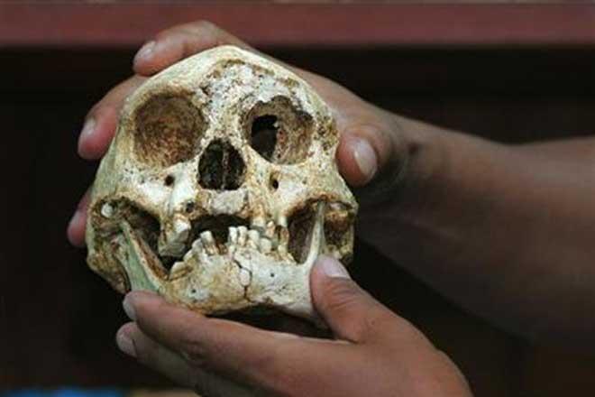 Incredible! Homo Erectus walked like us on two legs, reveals study