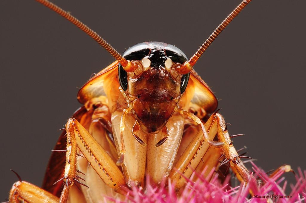 Yeni mucize ilaç: hamam böceği foto galerisi - 8
