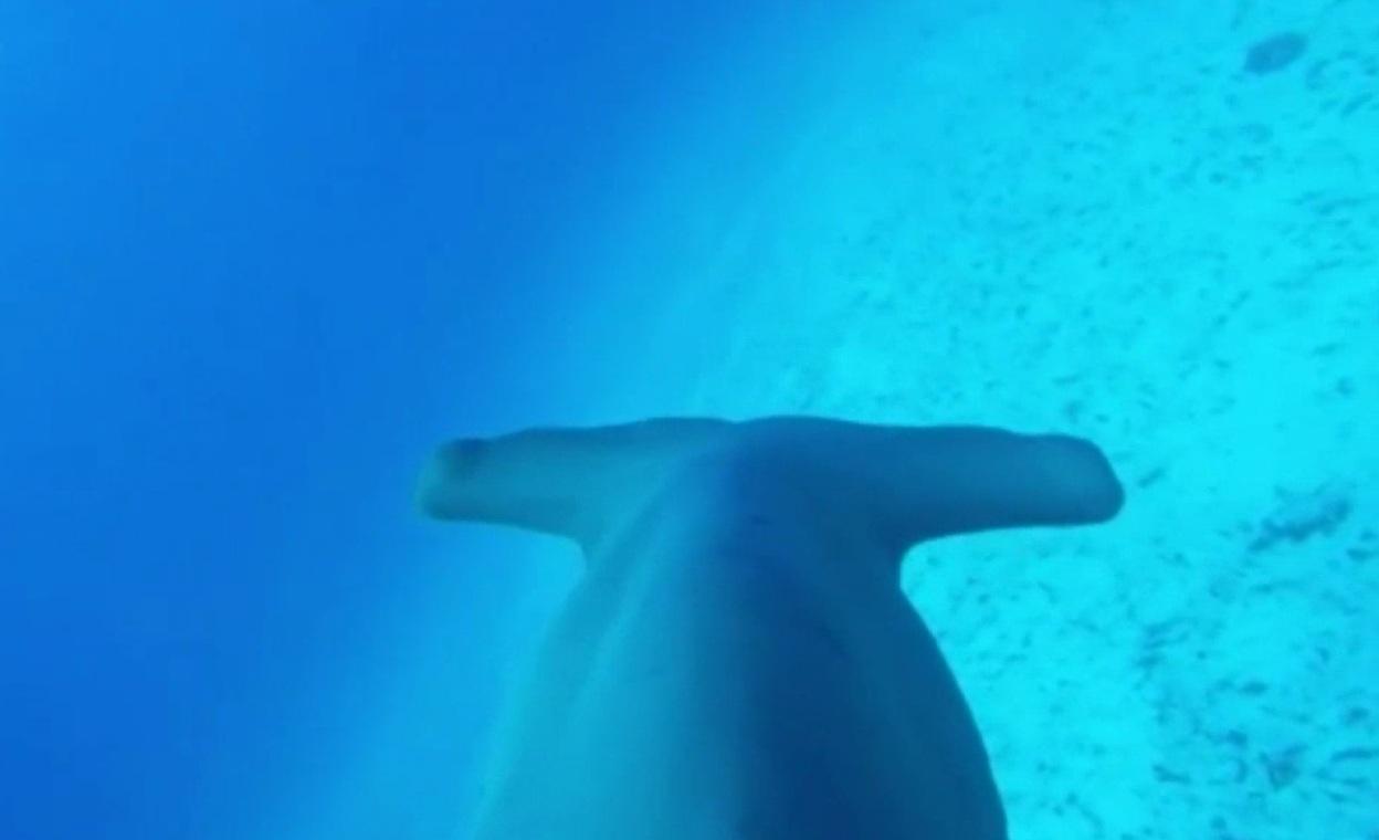 Meet lazy human version of shark hammerhead sharks for Shark tank fairy door