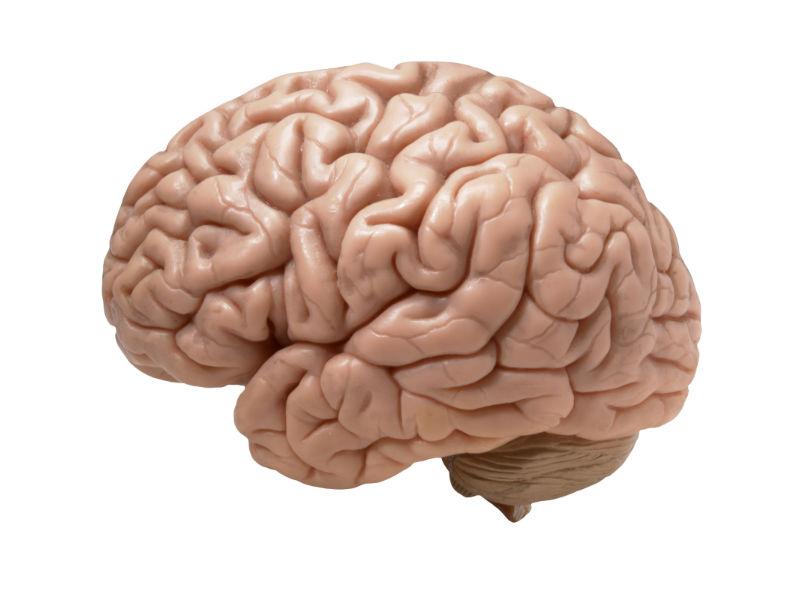 Human Brain - The TeCake