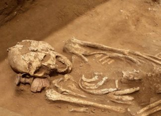 oldest bone