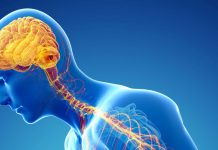Lab-grown 'mini human brains' to fight Parkinson's