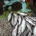 Breakthrough: Indian researchers convert fish scale biowaste to produce energy
