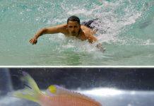fish named after Obama
