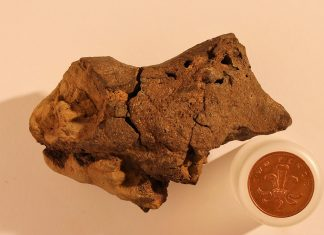 First tissue of Dinosaur's brain unearthed in a 130-million-year-old vestige