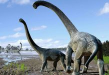 Palaeontologists unearth world's largest dinosaur fossil in Australia