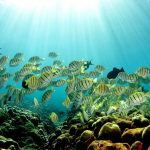 Changing Climate Can Turn Fishes Swim Towards Predators