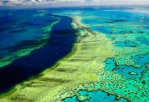 Australia's Great Barrier Reef are still alive but are endangered due to global warming