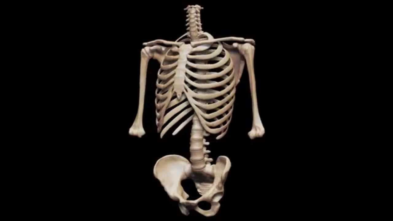 Here are few tips to keep your bones healthy and prevent them from diseases