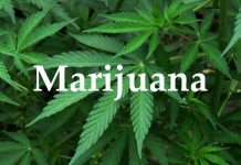 Early use of marijuana can decrease your IQ and make you Dumb