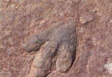 The world's largest dinosaur footprint has been uncovered in the Mongolian desert. Nearly the size of a full grown man, the footprint is said to belong to the Titanosaur, which lived on earth approximately 70 to 90 million years ago. (Photo : Steppinstars/Public Domain/Pixabay)