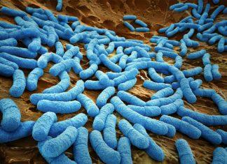 Human Cell organisms