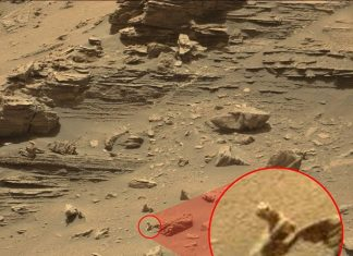 Lizard found on Mars is evidence of extraterrestrial life, claim alien hunters