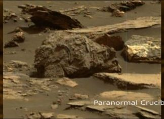 Alien hunters find strange fossilised creature on Mars in NASA Curiosity image, Watch Video