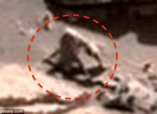 Alien hunter discovers 'hairy spider monkey' and 'slug animal' on Mars suggests alien life!