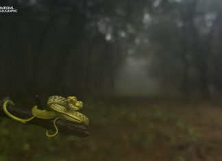 Dragging you deep into the woods. An Indian-origin photographer Varun Aditya clicked this picture and submitted under Animal Portrait category. It won first prize. (Source: National Geographic)