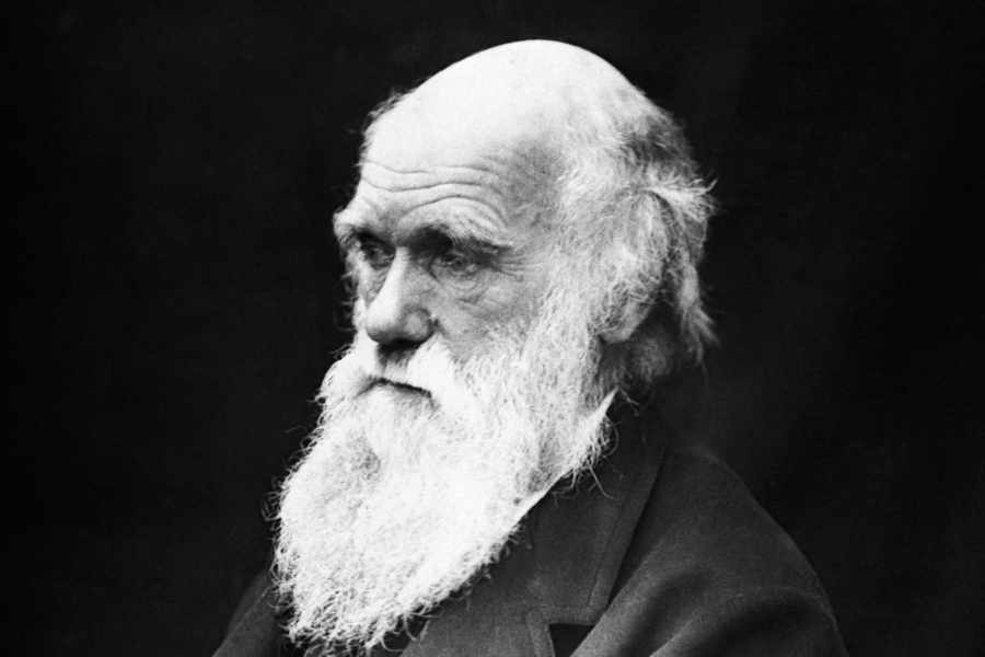 Researchers decode 51-million-year old secret to Darwin's theory of supergene