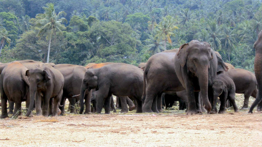 Rampant herd of elephants forcing several families to live on trees