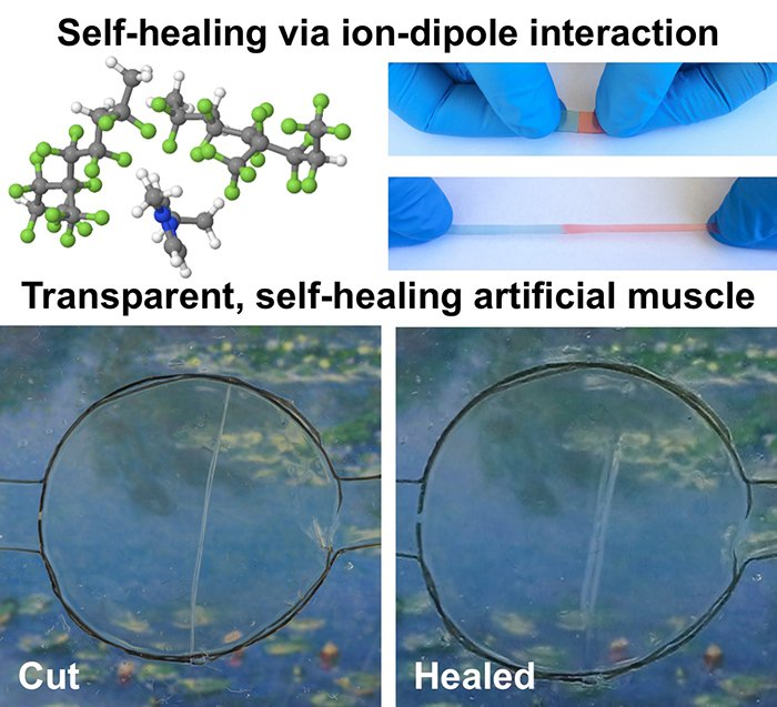 Researchers develop Wolvarine-like self healing and stretchable material
