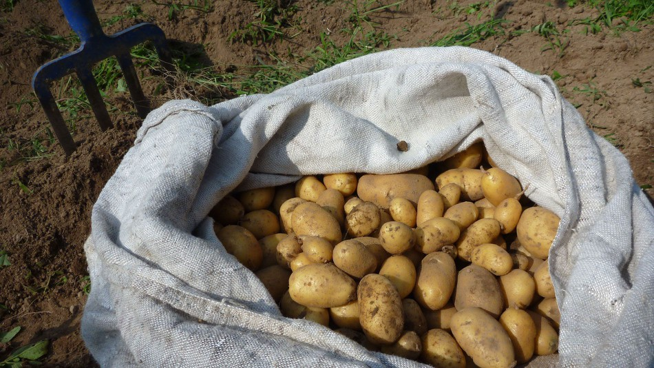 CIP's Preliminary Experiment Confirms Potato Cultivation Possibility On Martian Surface