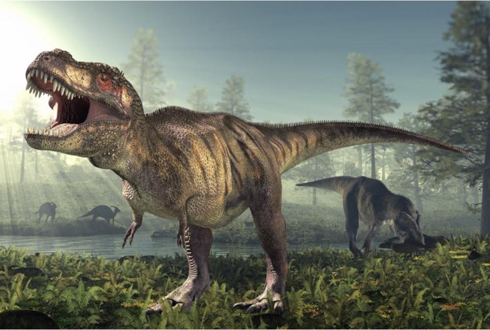 Rex had 8000-pound chomping power, study says
