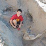 Kid fossil