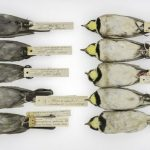 bird fossil