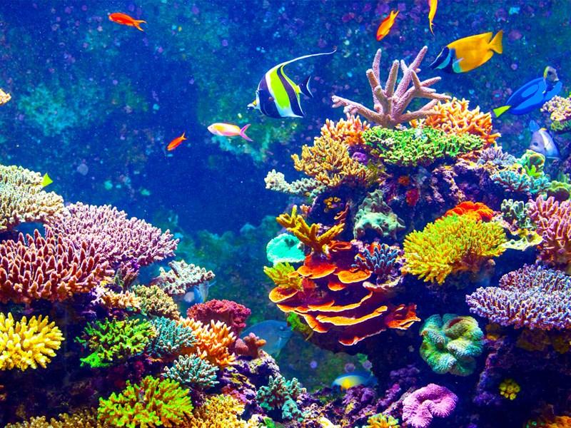 A unique technique to prevent the coral reefs