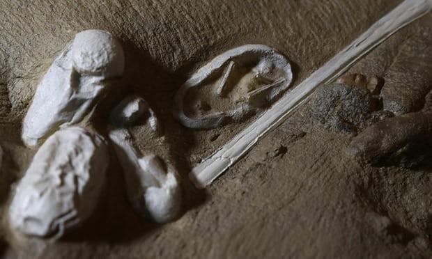 Egg Fossil