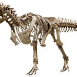Investigators amazed by the huge discovery regarding dinosaurs