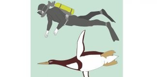 Man-size Giant penguin discovered by scientists in New Zealand