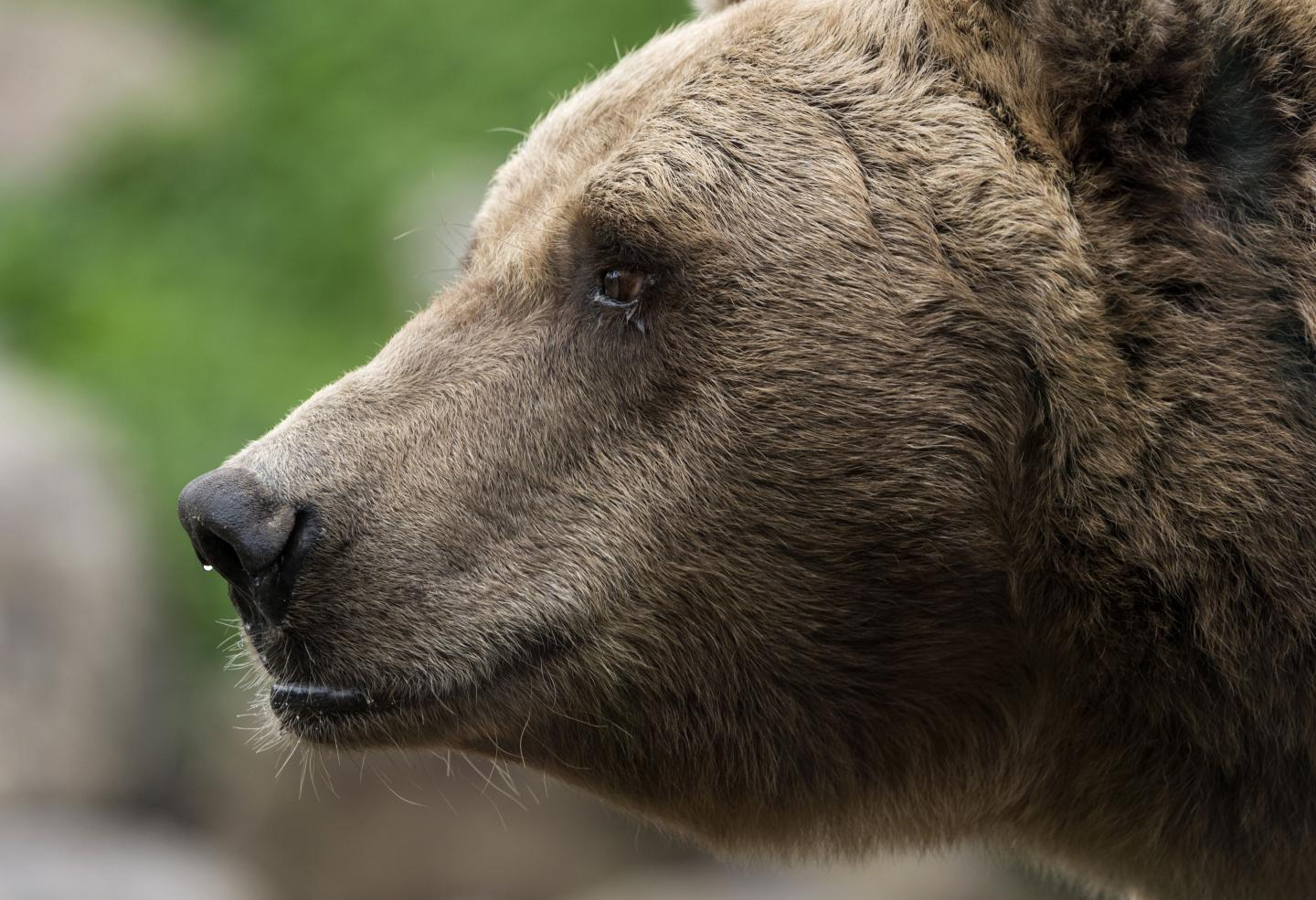 The 3.5 million-year-old bear fossils revealed cavities in its teeth from eating too many sweets