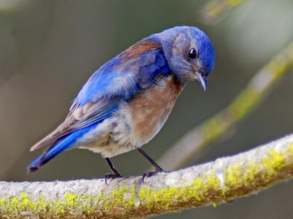 Noise from oil and gas operations stresses birds, hinders reproduction