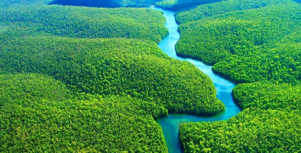 There is a 50% probability of Amazon rainforest turning into barren savannah
