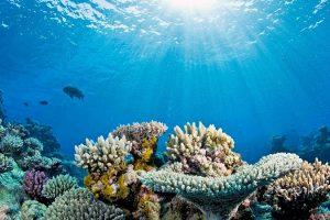 Coral Reefs might dissolve completely by the end of this century