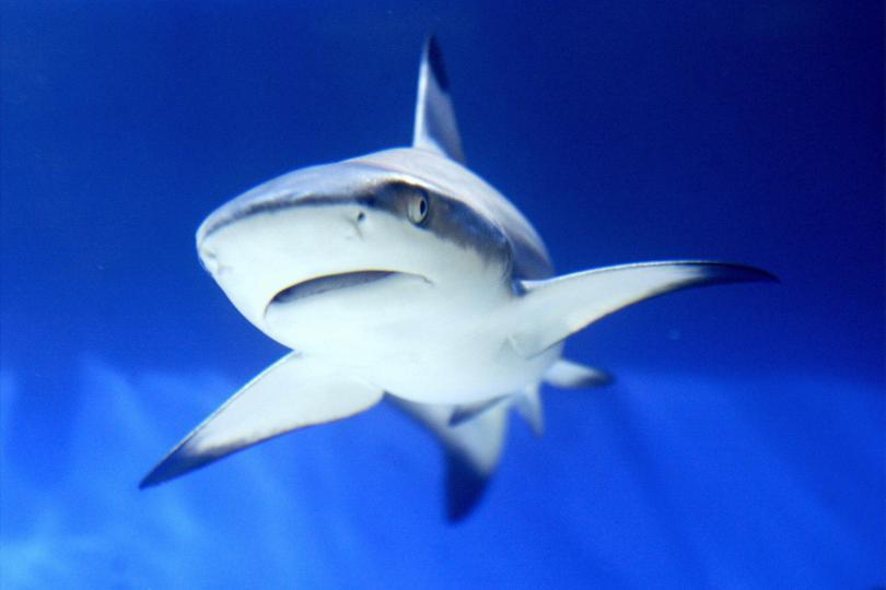 New species of sharks discovered in Atlantic Ocean